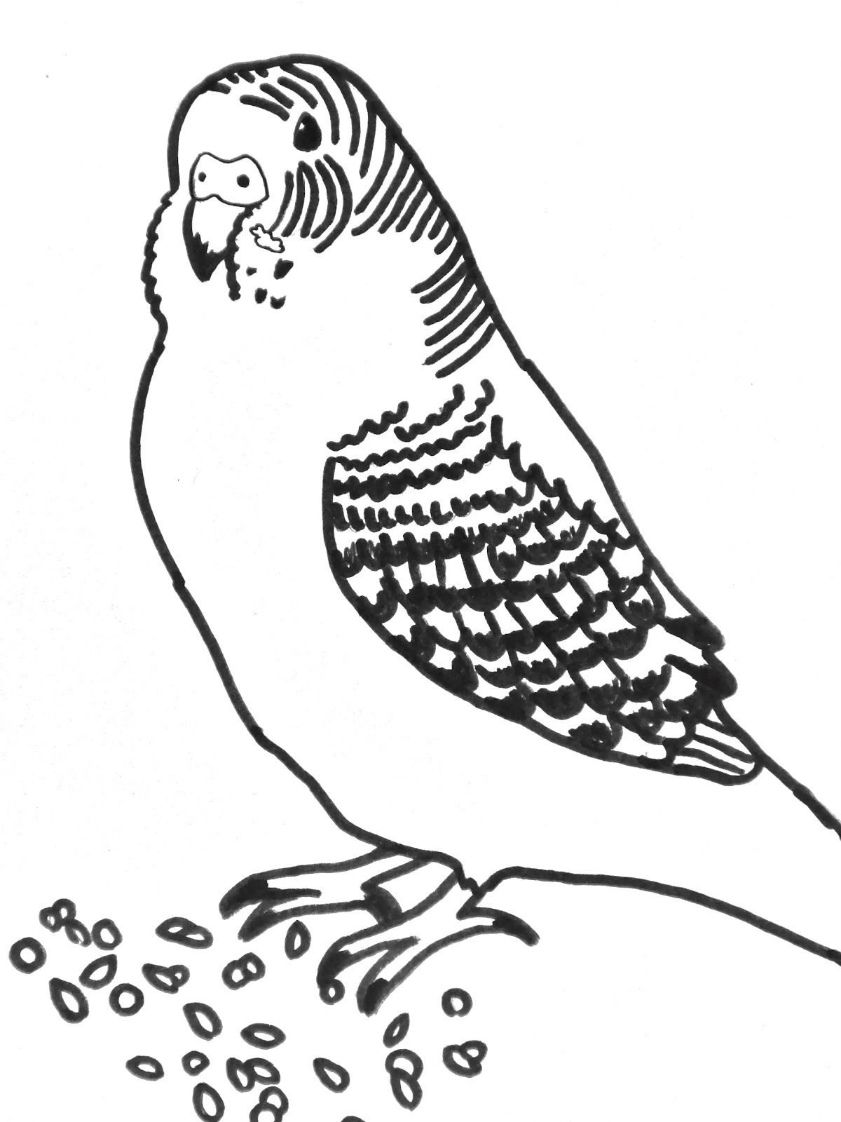 1200x1600 Parakeet Coloring Pages