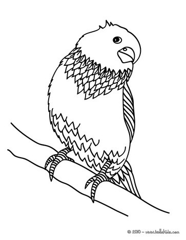363x470 Parakeet Coloring Pages