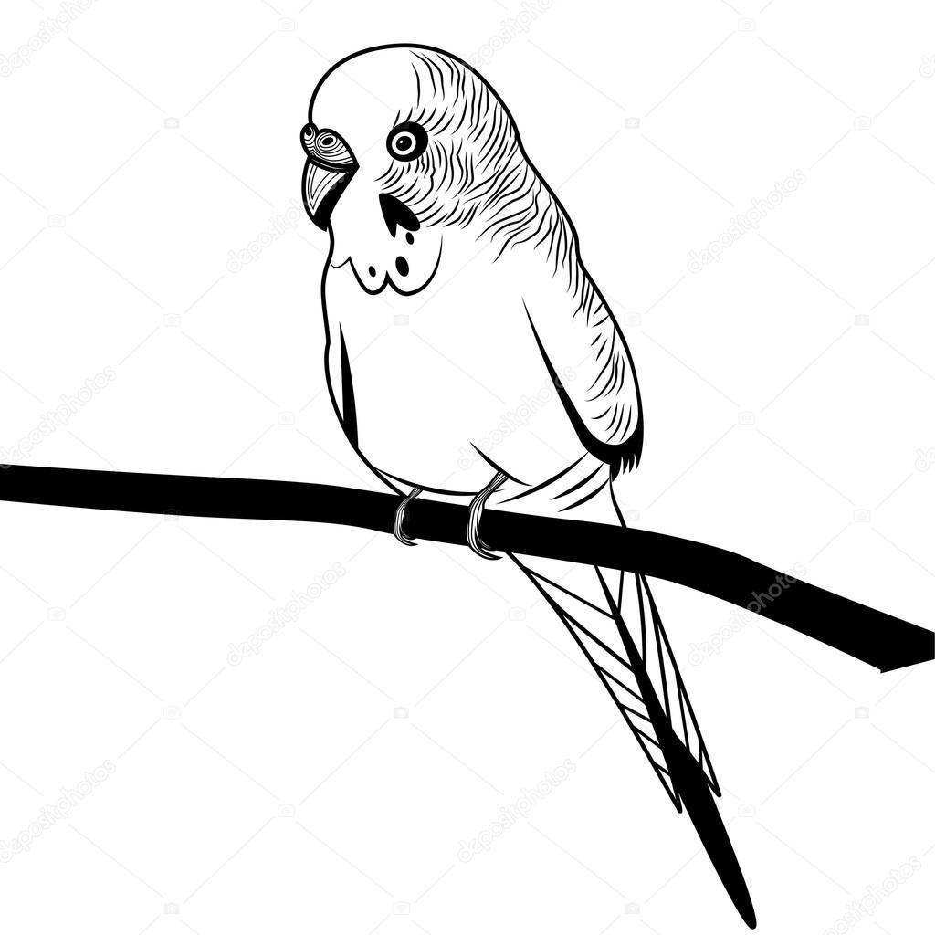 1024x1024 Parrot Budgie Bird Sketch Stock Vector Svetap