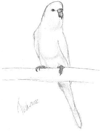 323x424 Bird Kate's Art Corner