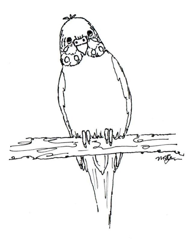 635x799 Photo Budgie 01a.jpg Colouring Pages Embroidery