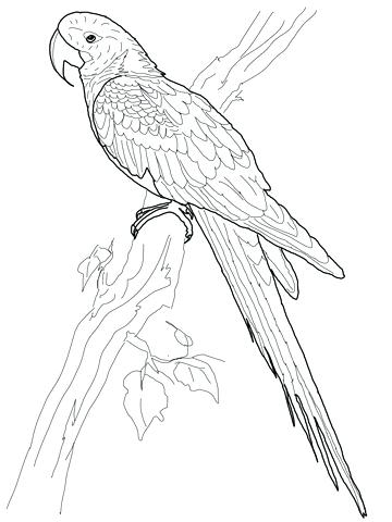 360x480 Awesome Parakeet Coloring Pages Free Download Draw Your Own Page