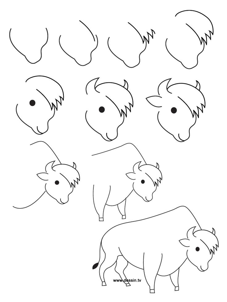 Buffalo Cartoon Drawing