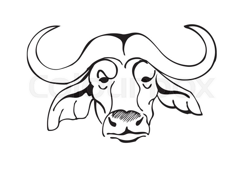 800x553 African Buffalo Head, Black And White Vector Illustration Stock