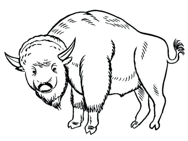 600x450 Buffalo Coloring Pages Bison Coloring Page For Kids Buffalo