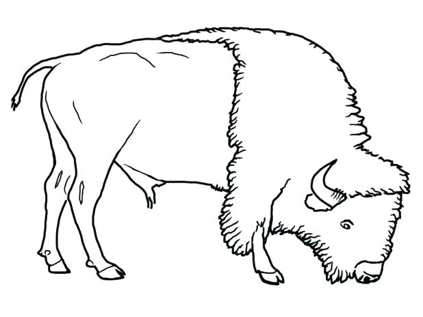 618x464 Buffalo Coloring Pages Buffalo Bills Coloring Pages Bison Coloring