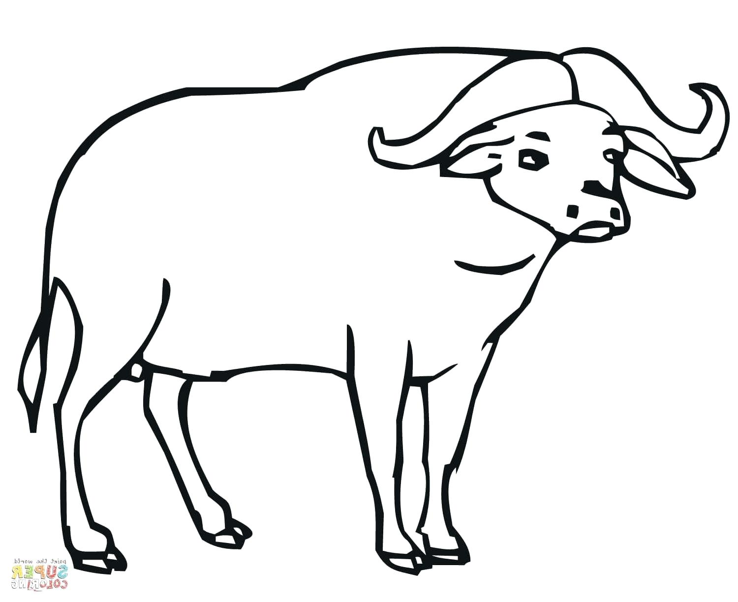 1500x1224 Coloring Buffalo Coloring Pages Exciting Soldiers. Buffalo