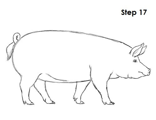 500x386 How To Draw A Pig