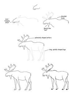236x305 How To Draw A Deer Step By Step Art Drawings