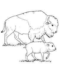 203x248 Image Result For Isolated Buffalo Head Coloring Pages