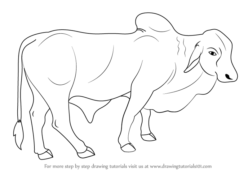 800x563 Learn How To Draw A Bull (Farm Animals) Step By Step Drawing