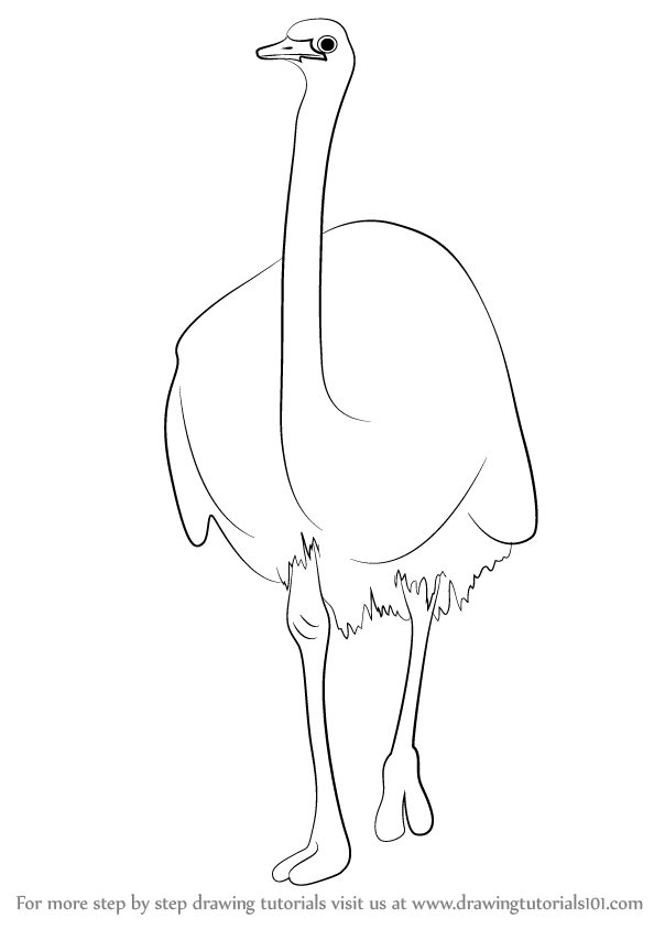 594x843 Learn How To Draw A Emu (Farm Animals) Step By Step Drawing
