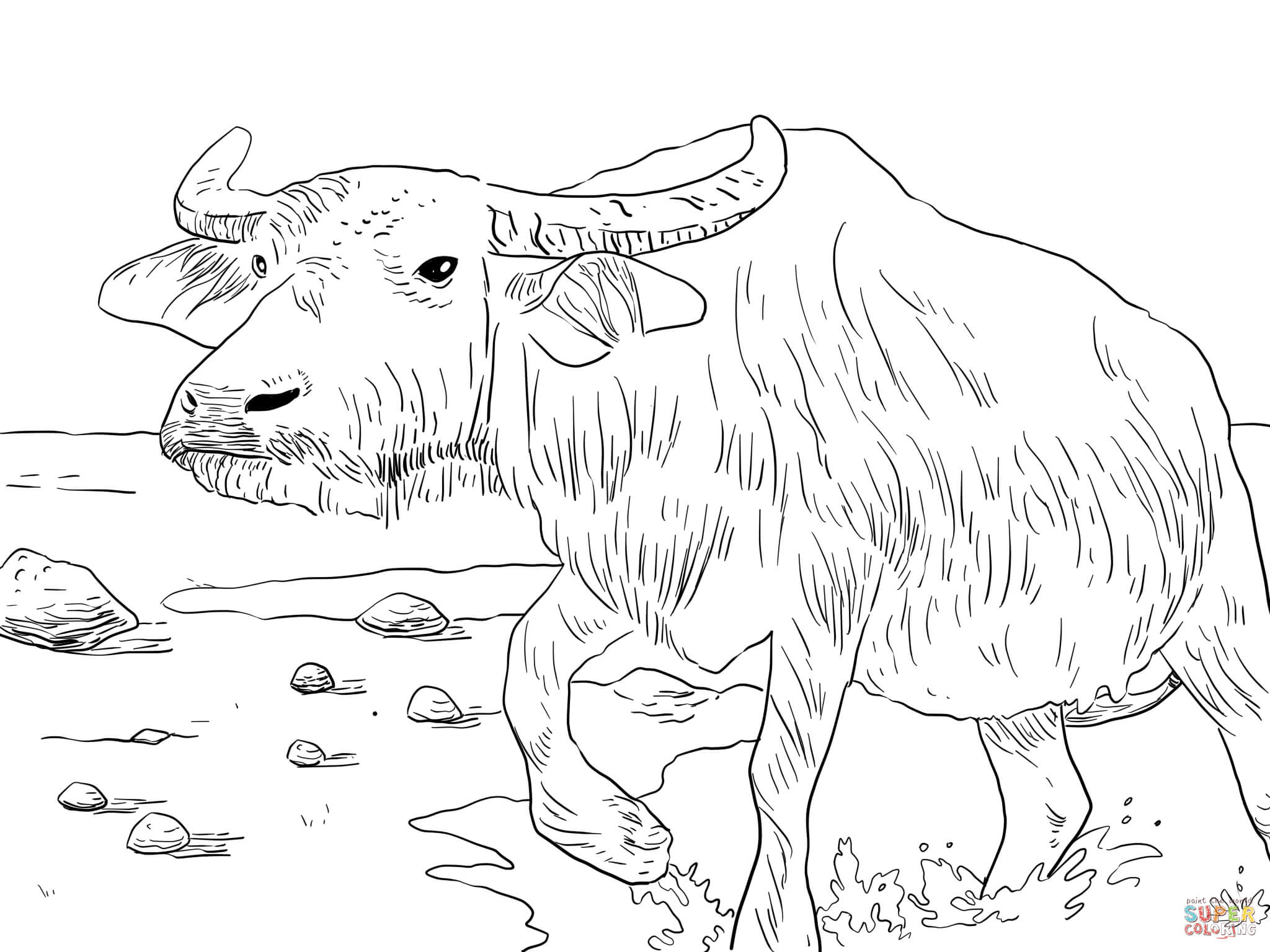 2048x1536 Water Buffalo Coloring Page Free Printable Coloring Pages