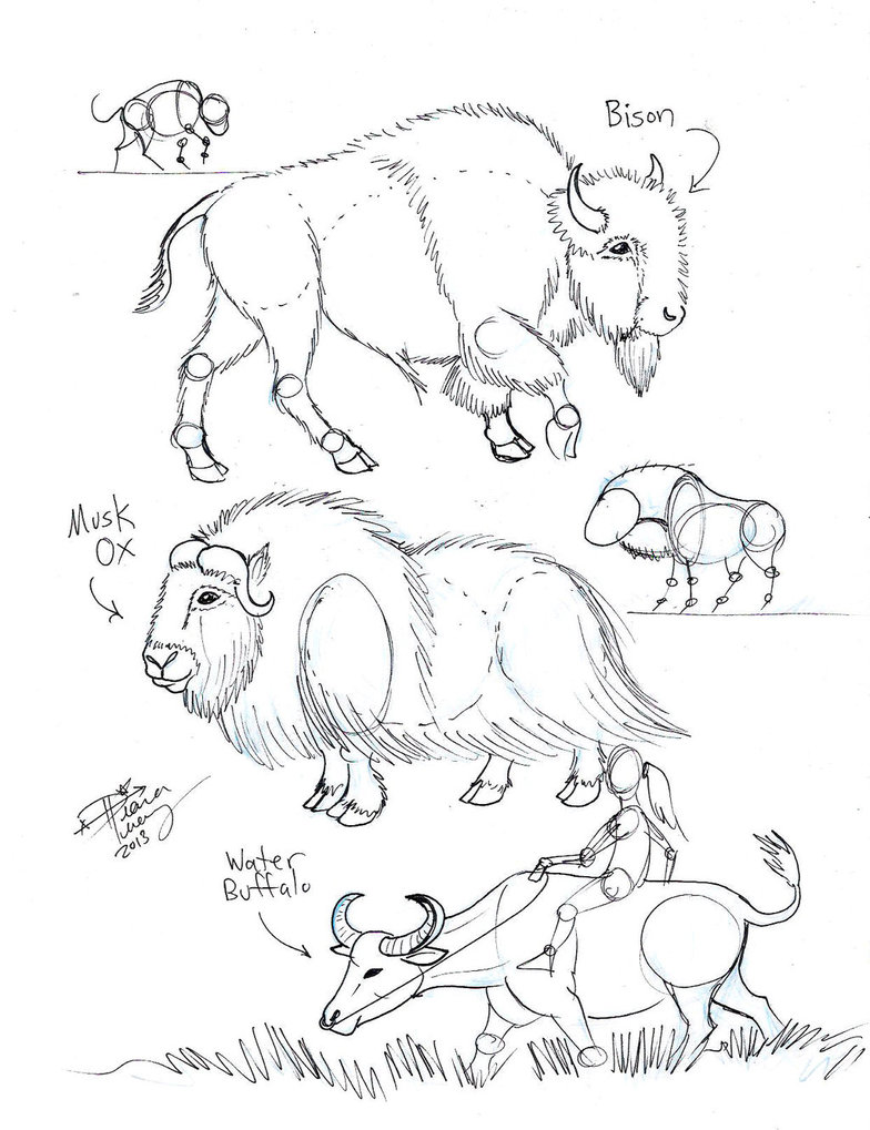 784x1019 Draw Bison, Musk Ox And Water Buffalo By Diana Huang Animal