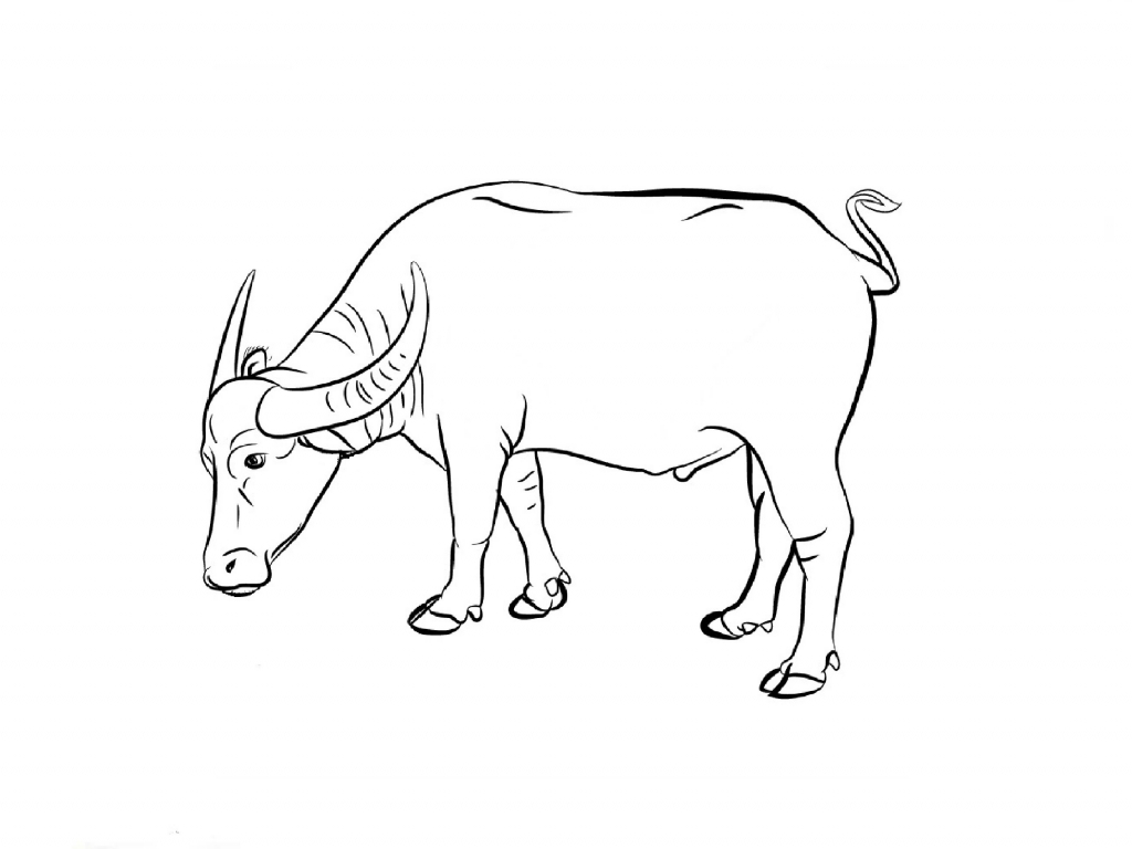 1024x768 Drawing Of A Buffalo How To Draw Buffalo Bison Step Step Great