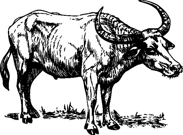 600x444 Bull Clip Art