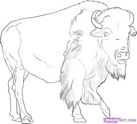 480x436 75 Best Buffalo And Bison Sketches Images On American