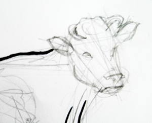 Line Drawing Of Child S Face : Buffalo face drawing at getdrawings free for personal use