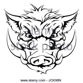 318x320 Wild Boar Drawing Face Stock Vector Art Amp Illustration, Vector