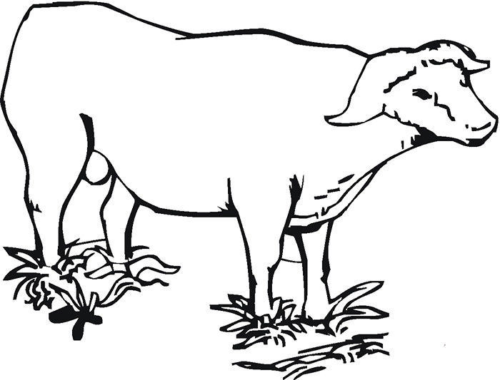 Coloring Pages Animals Zoo : Buffalo outline drawing at getdrawings.com free for personal use