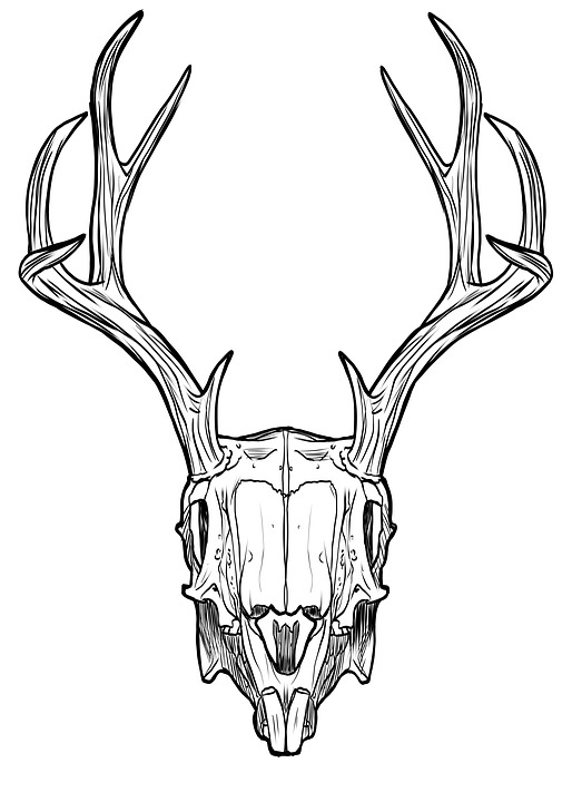 514x720 Free Photo Fantasy Horns Antlers Rabbit Skull Jackalope