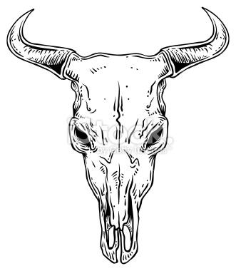 331x380 Head Skull Drawing