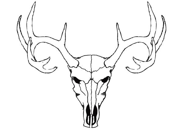 600x425 Horns Clipart Animal Skull