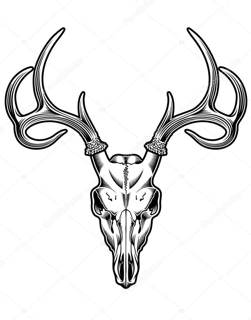 803x1024 Animal Skull Stock Vectors, Royalty Free Animal Skull