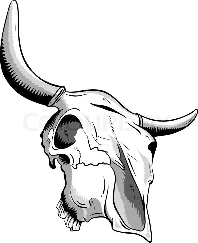 654x800 Animal Skull Isolated On The White Stock Vector Colourbox