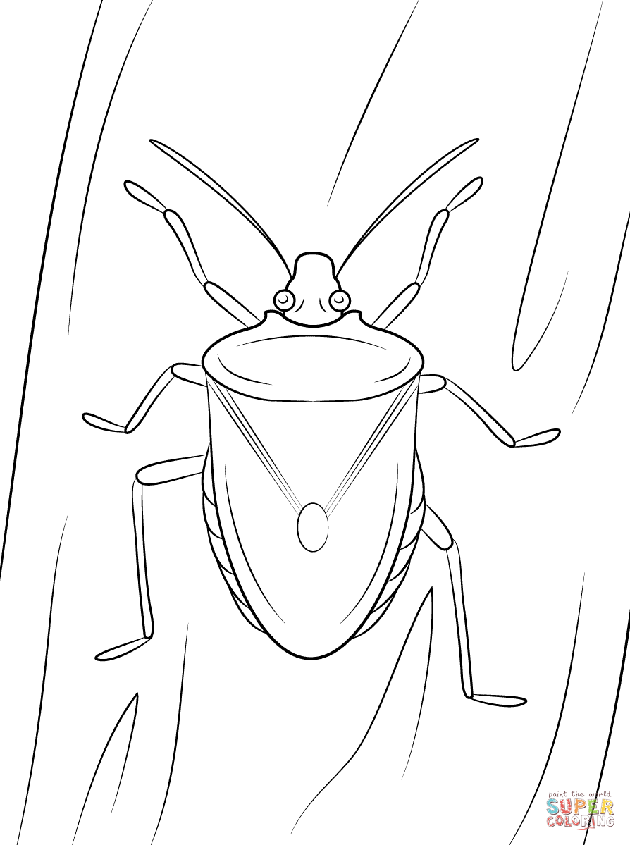 Bug Drawing at GetDrawings.com   Free for personal use Bug Drawing ...