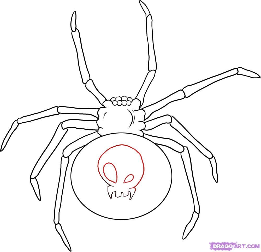 1000x968 Black Widow Drawing How To Draw A Black Widow, Stepstep, Bugs