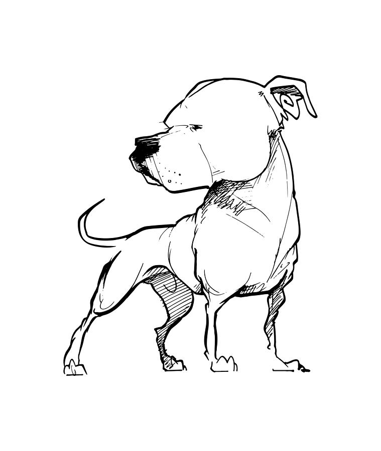 759x900 American Bulldog Gesture Sketch Drawing By John Lafree