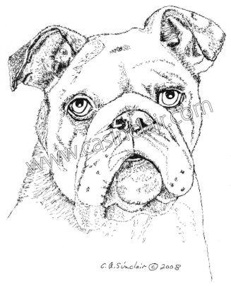 327x404 English Bulldog Dog Portraits, Dog Paintings, Dog Drawings