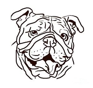 300x285 English Bulldog Drawings