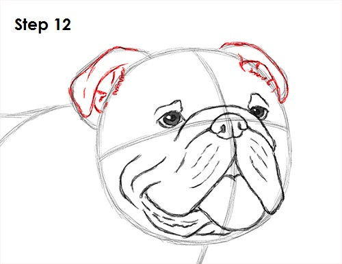 500x386 How To Draw A Bulldog