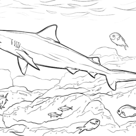 268x268 Coloring Pages Bull Shark Kids Drawing And Coloring Pages