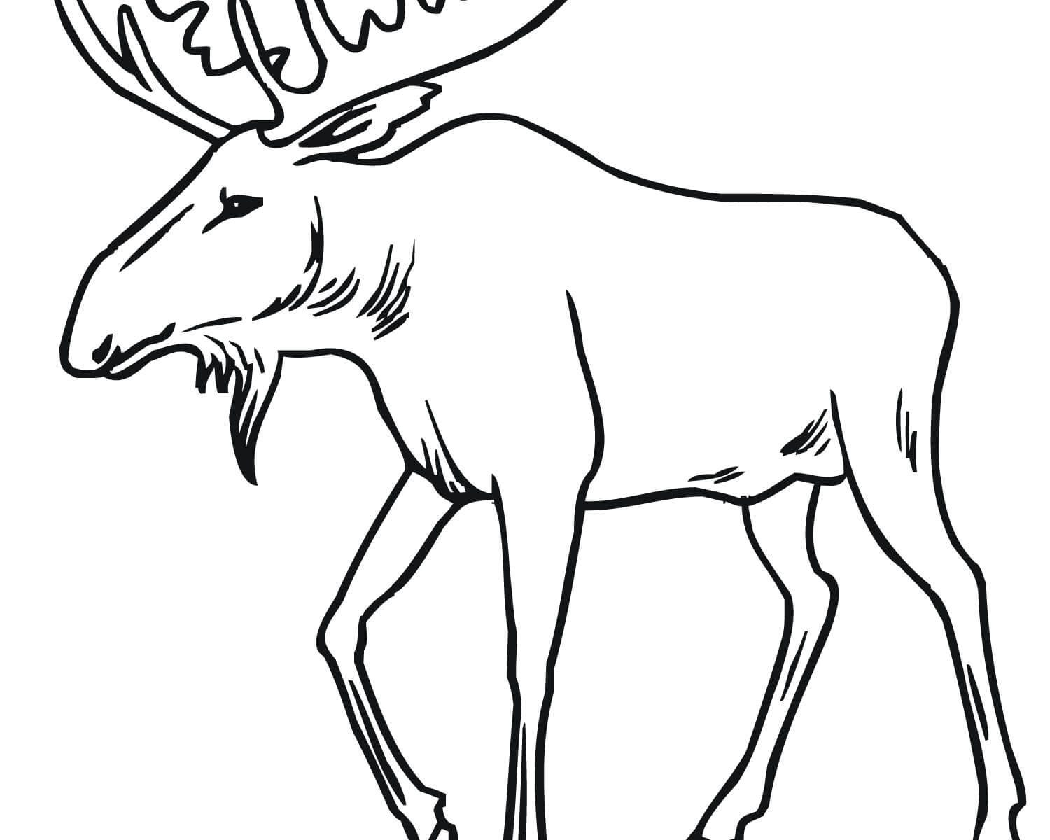 1500x1200 Beautiful Printable Moose Coloring Pages Free Animals Bull