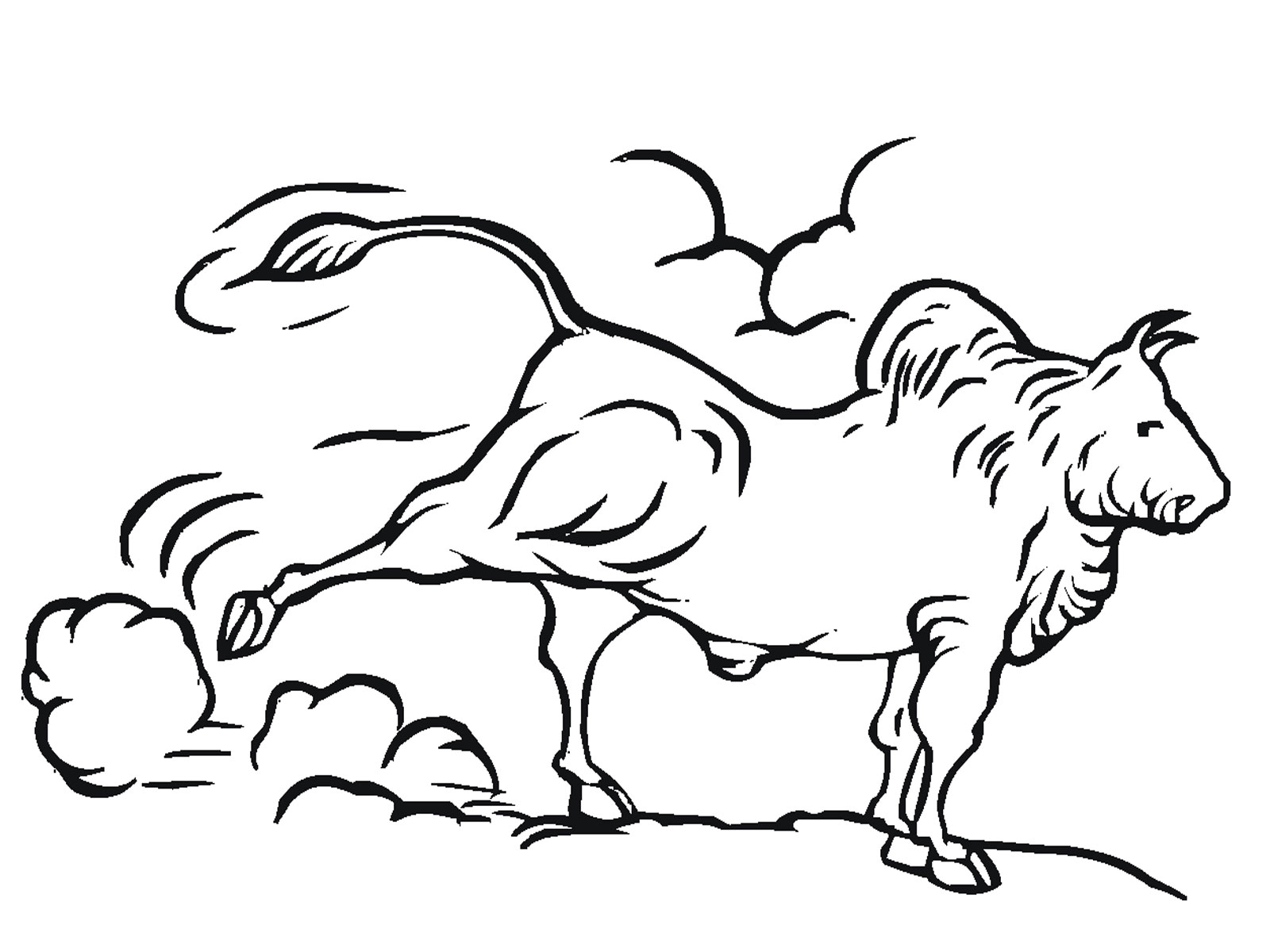 1600x1200 Bull Coloring Pages Printable Realistic Coloring Pages