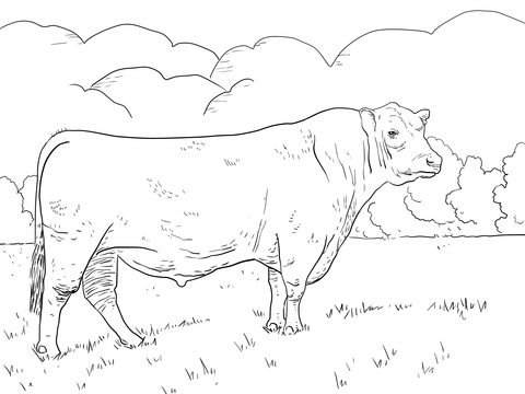 Bull Drawing Pictures