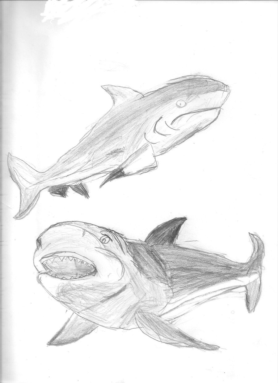 900x1238 Bull Shark Sketches By Art By Sammy