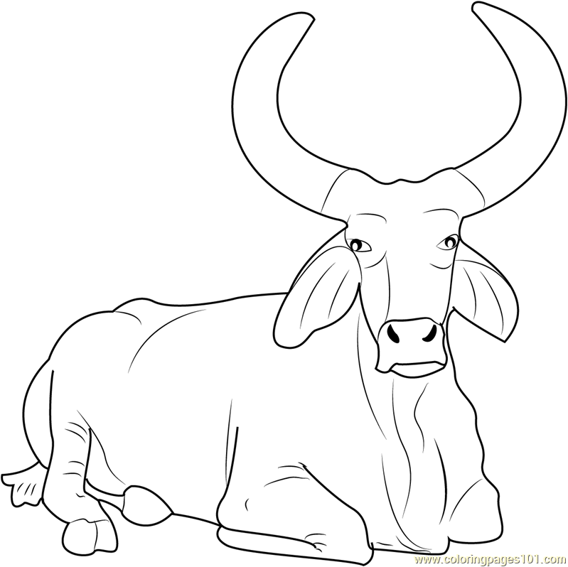 799x798 Beautiful Bull Coloring Page