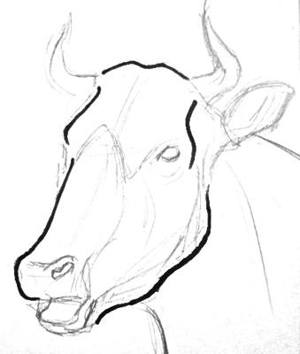 300x354 How To Draw A Bull Head