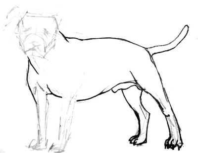 400x308 How To Draw A Pit Bull Step By Step