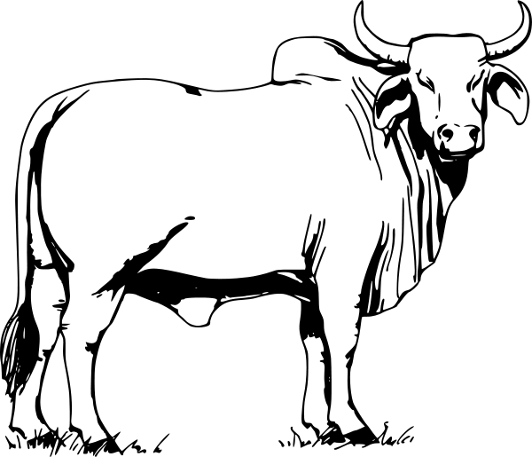 600x515 Bull Clipart Bull Clip Art Free Vector In Open Office Drawing Svg