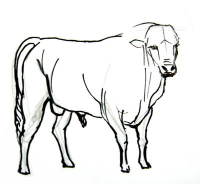 400x367 How To Draw A Bullfighting Bull