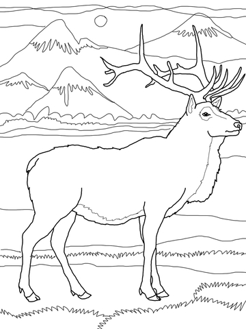 360x480 Elk Or Wapiti Coloring Page Free Printable Coloring Pages