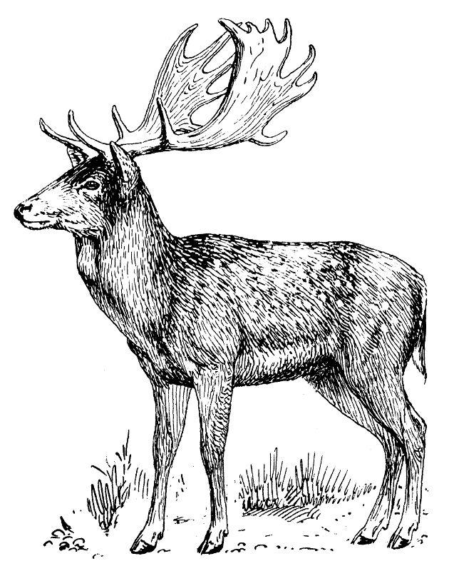 630x800 69 Best Lov Images On Animal Drawings, Badger And Deer