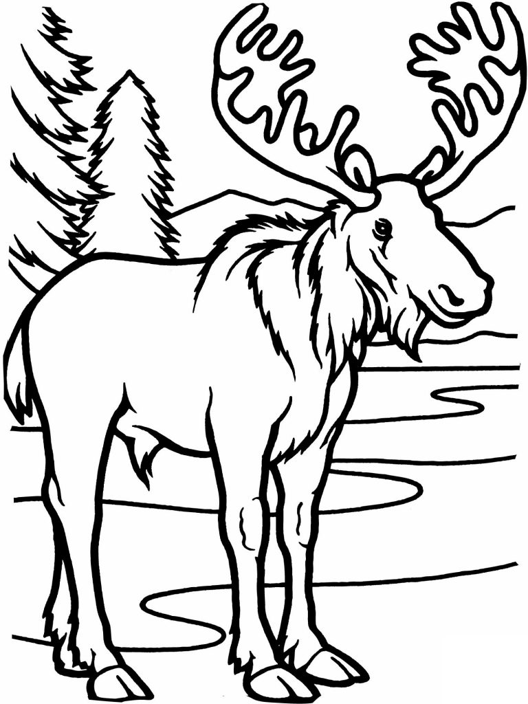 768x1024 Moose Coloring Pages Printable Quilts Moose