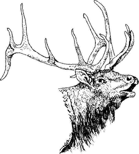 579x640 Pin By Natalie Martin On Zentangle Elk