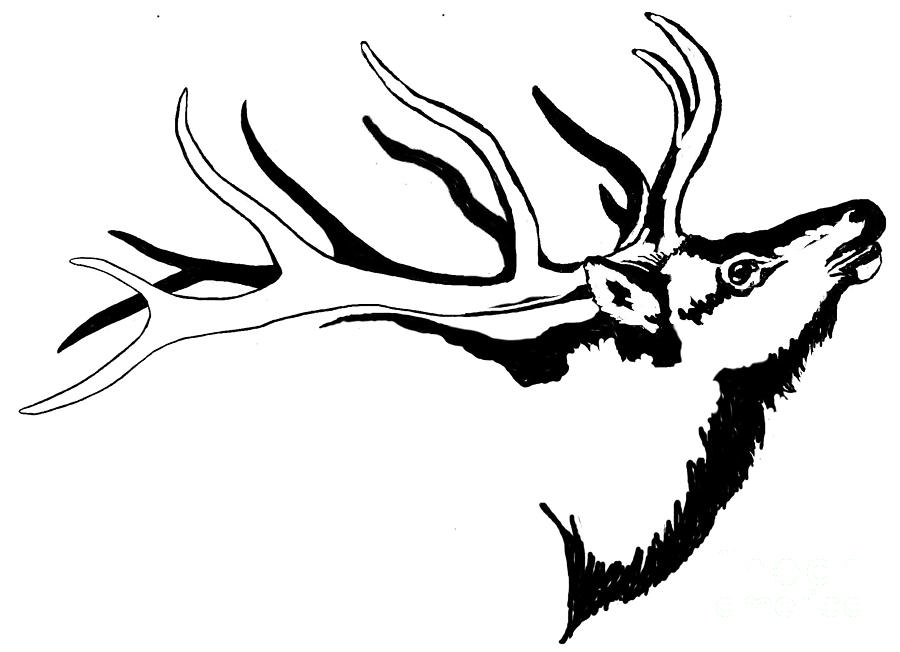 900x652 Tribal Elk Related Keywords Amp Suggestions